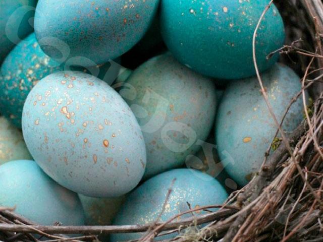 Пасхальные яйца нежно-синего цвета